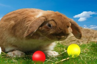 bunny with Easter eggs