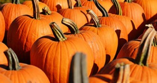 Choose the Perfect Carving Pumpkin