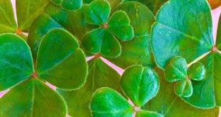 St. Patrick's Day Symbols and Blessings