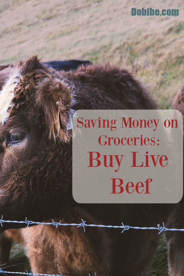 It is not always possible to buy live beef to be slaughtered but it does save money when you can. Tips on how to find and working with a butcher.