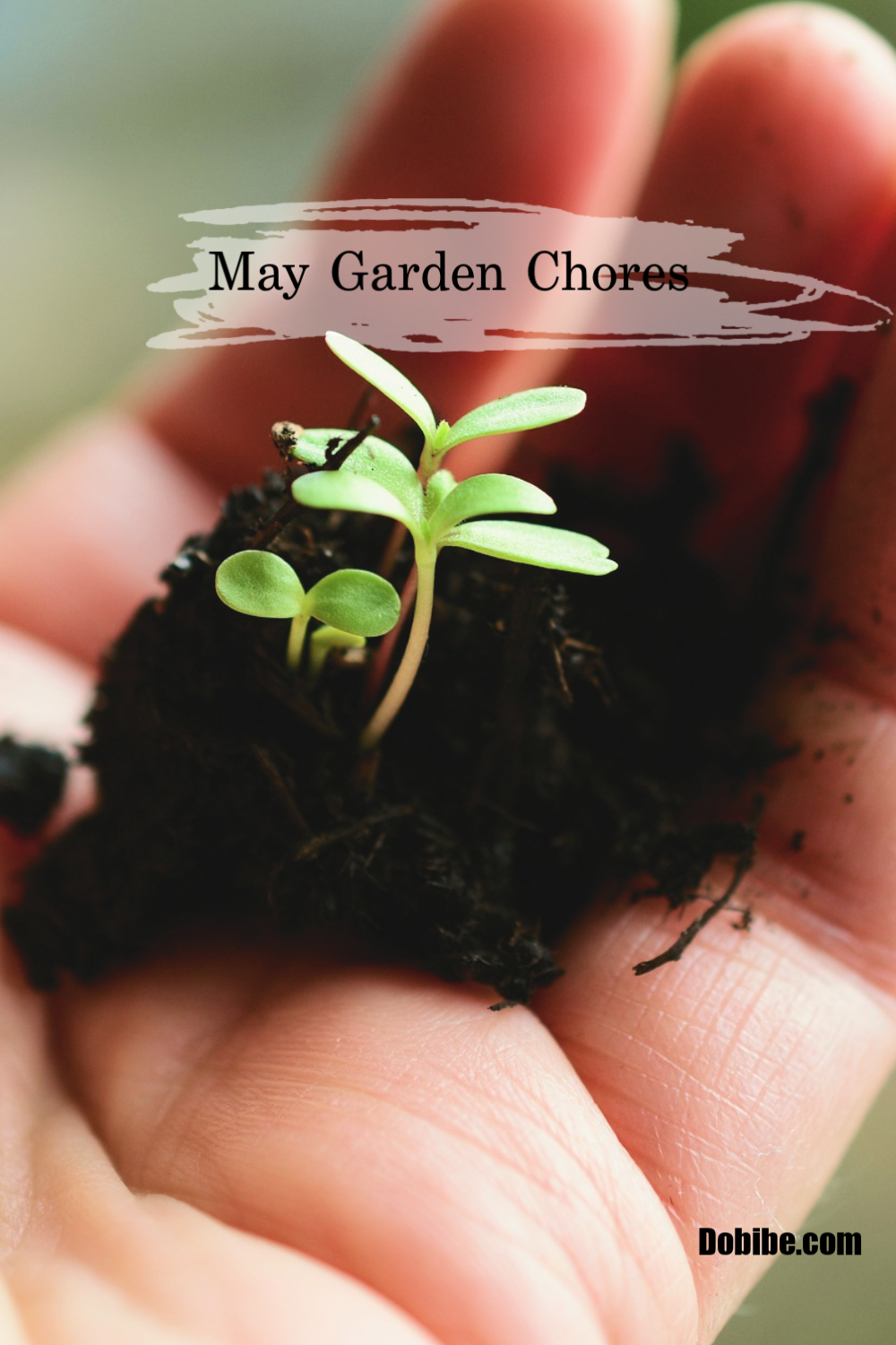 May garden chores are many as this is the month in zone 4 where planting begins. This list is used for my zone 4 garden.